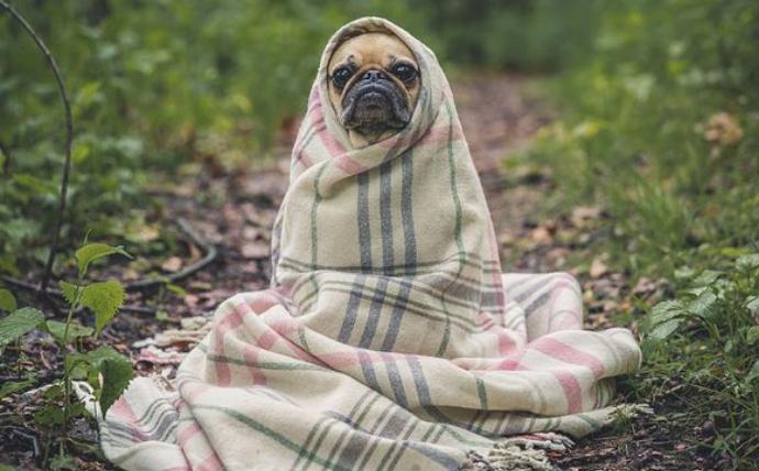 狗狗铺凉席关灯睡觉,狗狗都比我过得有仪式感