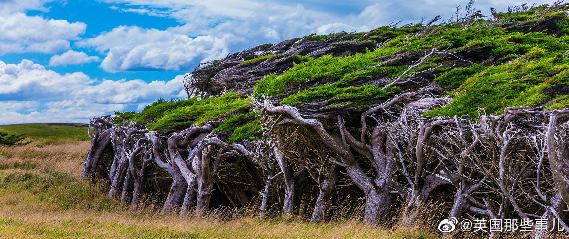 被大风吹歪的树