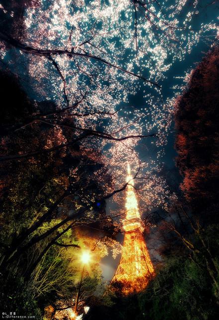 东京塔下的满开夜樱花 好美啊
