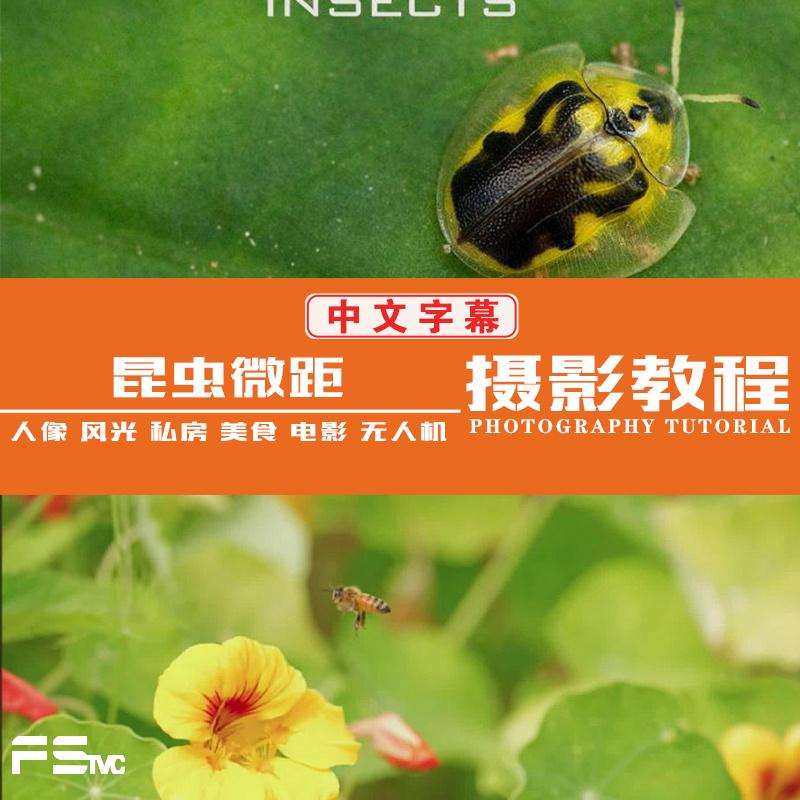 [风光摄影教程] Craftsy –宏观摄影:精通昆虫微距摄影完整指南教程-中文字幕