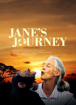 BBC:珍·古道尔—美女与野兽