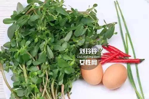 处暑吃马齿苋的季节 长寿菜马齿苋的作用1