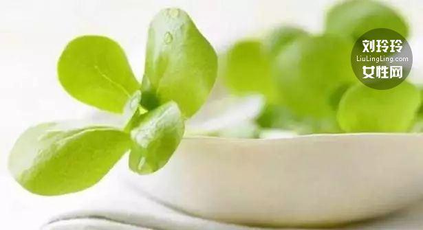 处暑吃马齿苋的季节 长寿菜马齿苋的作用5