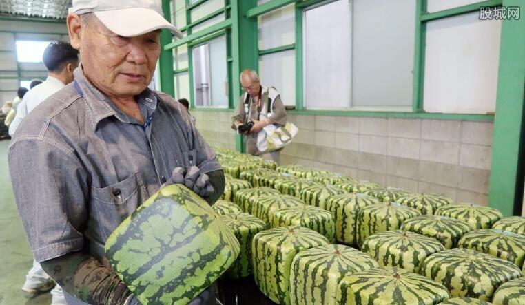 日本开卖方形西瓜 这种方形西瓜竟可保存半年
