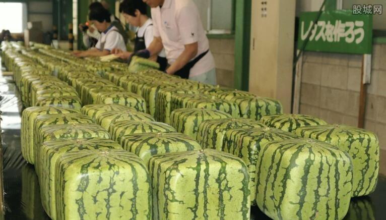 日本开卖方形西瓜 这种方形西瓜竟可保存半年 网络热点 第2张