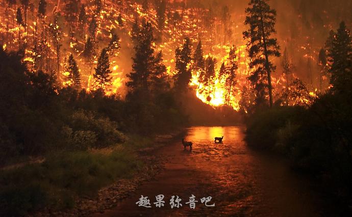 澳大利亚丛林大火可能会给地球带来7大变化-爱趣猫