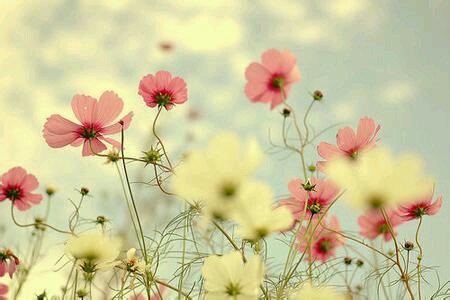 早安心语150316:不为明天而烦恼,不为昨天而叹息,只为今天更美好