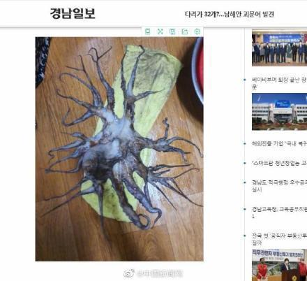 """2条腿章鱼被发现,日本曾发现85条腿和96条腿的章鱼"""""""