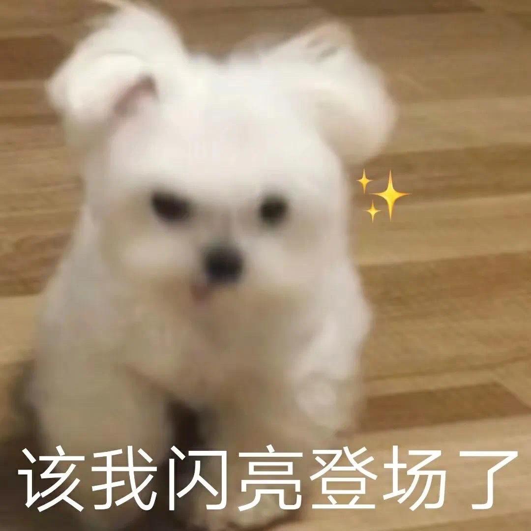 可爱狗狗表情包
