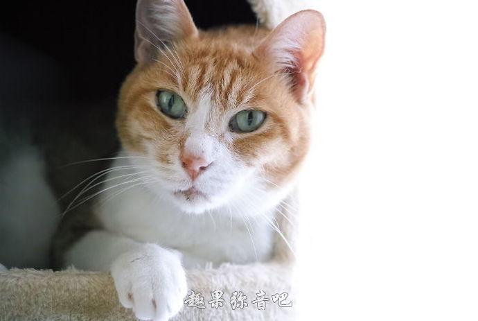 20个关于动物的冷知识:原来喵星人从没把我们当人看!-爱趣猫