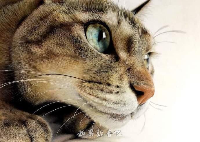 以假乱真的猫咪色铅笔画:揉揉眼睛,有没有看错?-爱趣猫