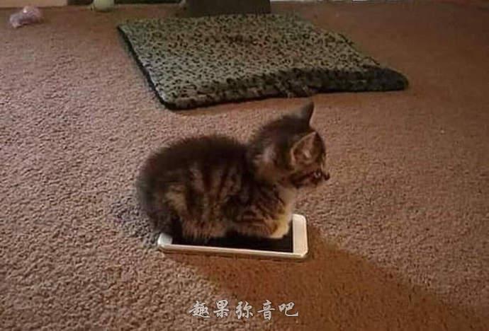 猫奴的共同宿命:侵占手机的猫咪-爱趣猫