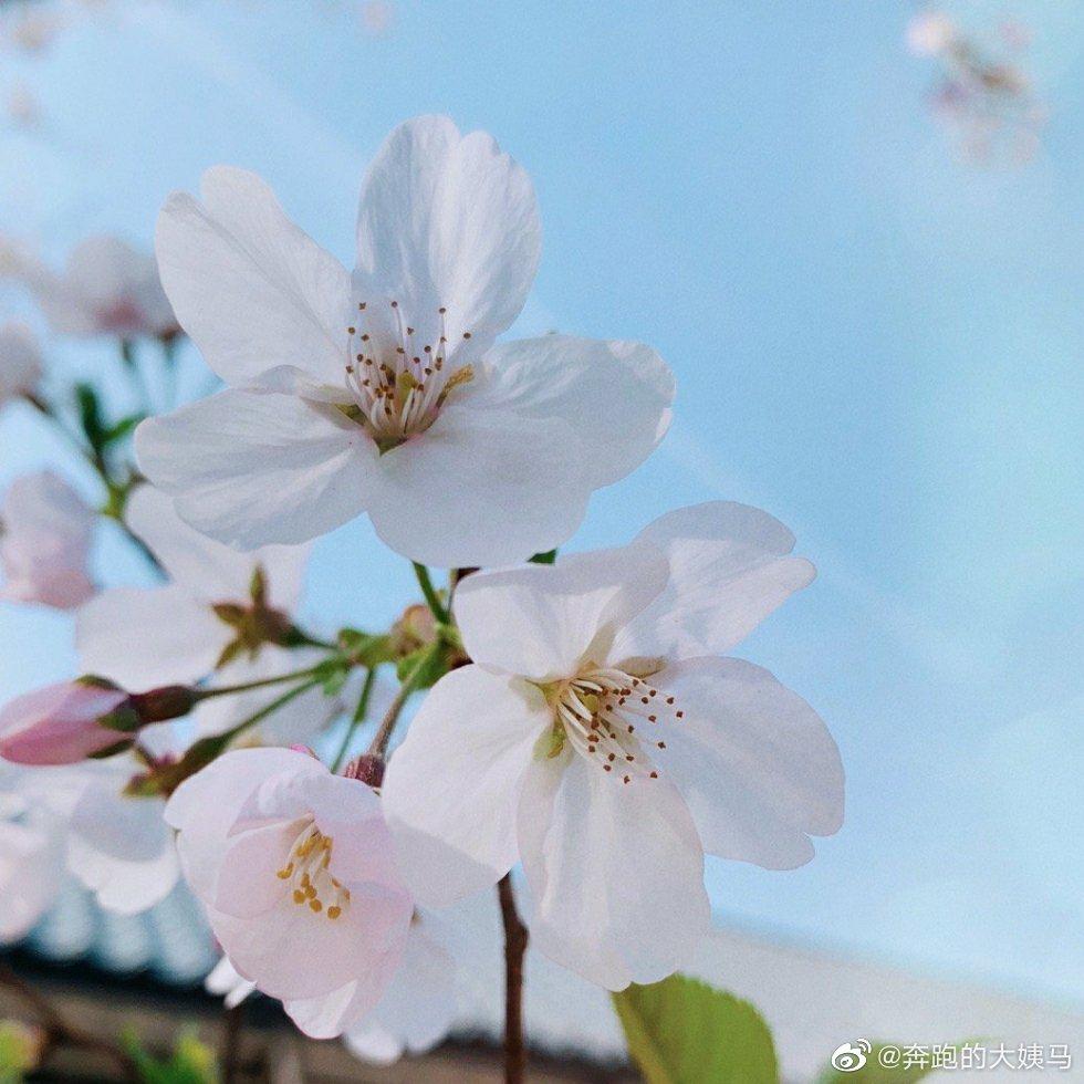 情感语录-你相册里的樱花照