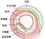 孕期第2周(备孕)