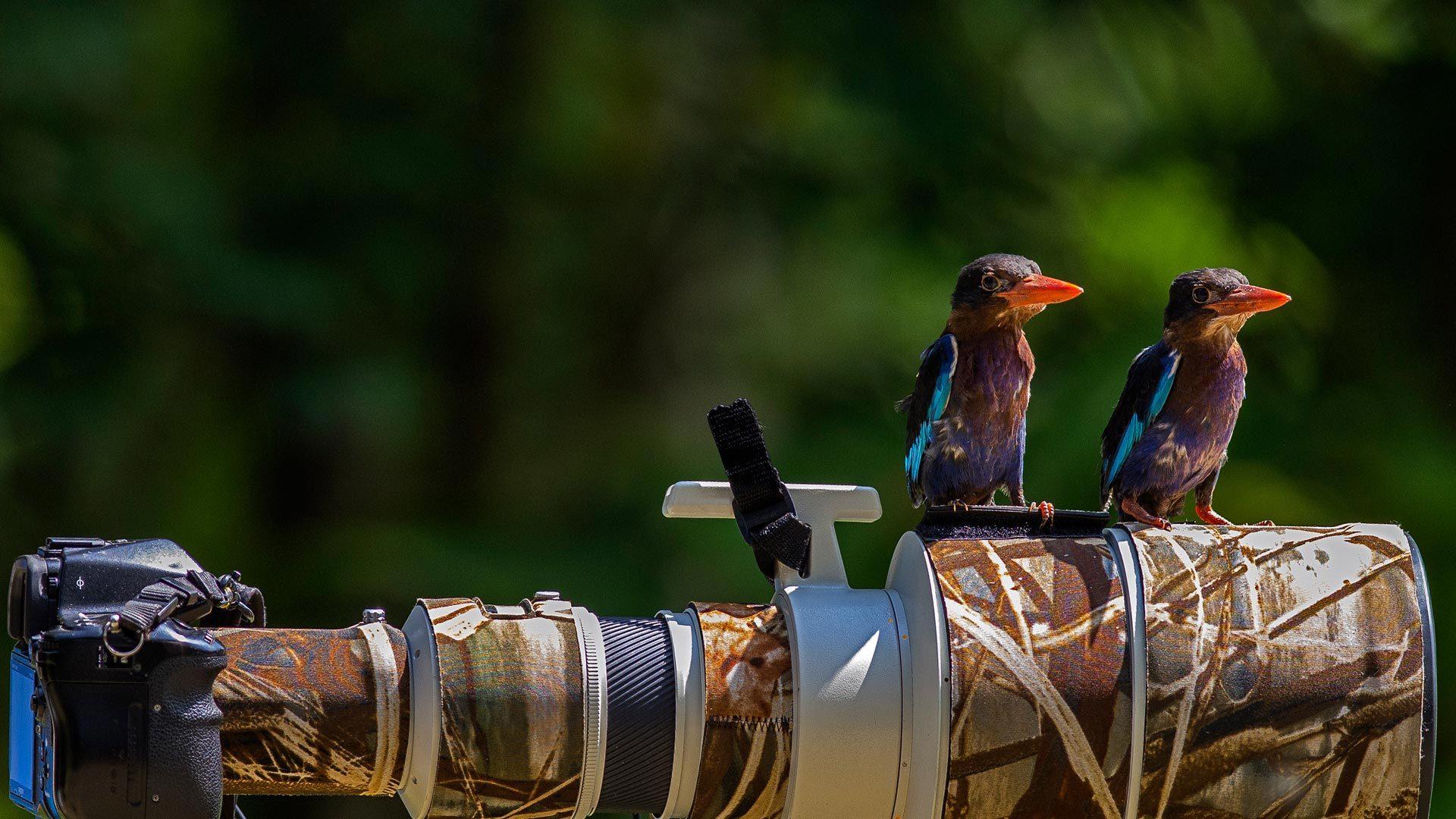 伫立的翠蓝之鸟
