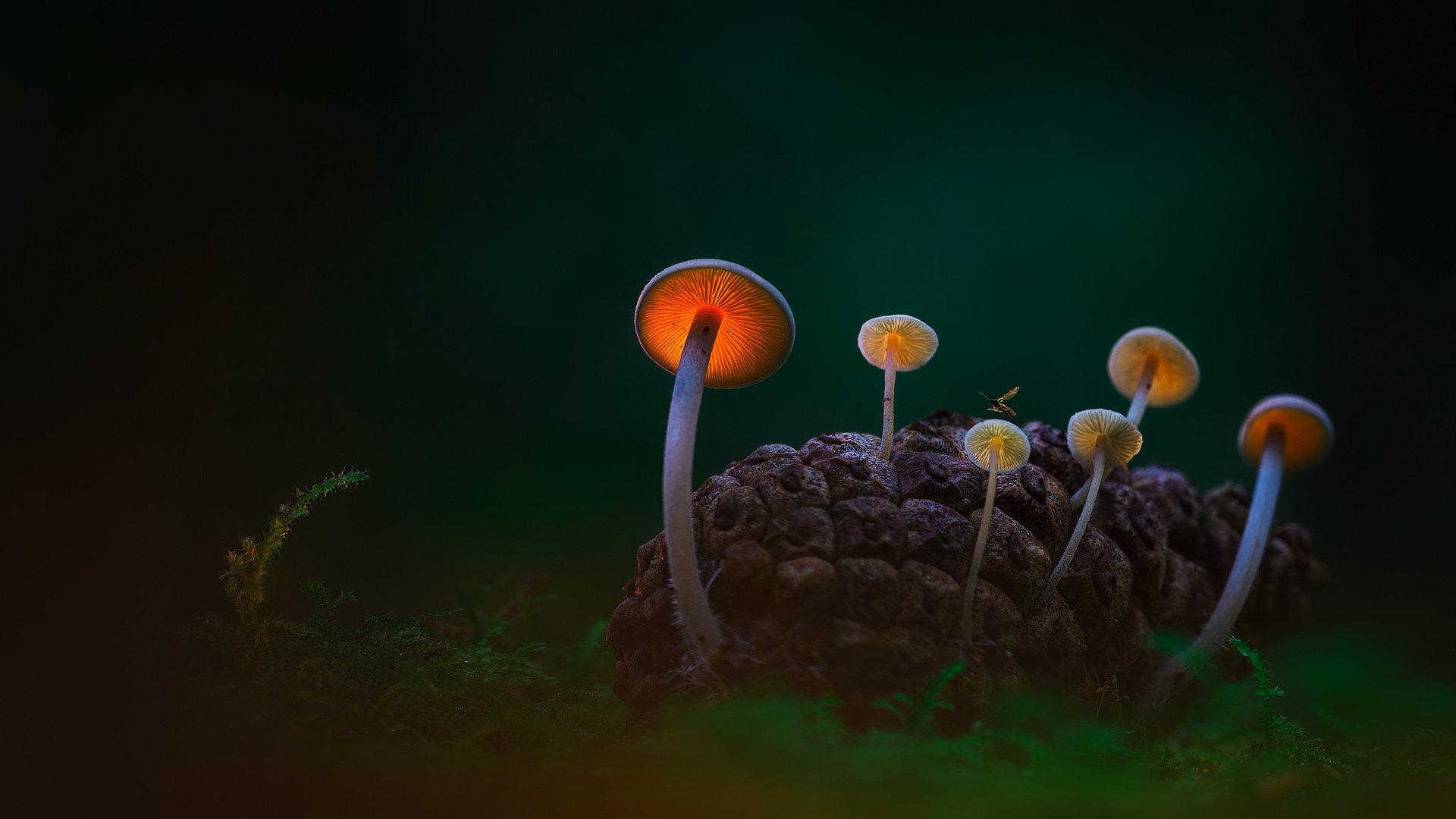 透过蘑菇的暮光