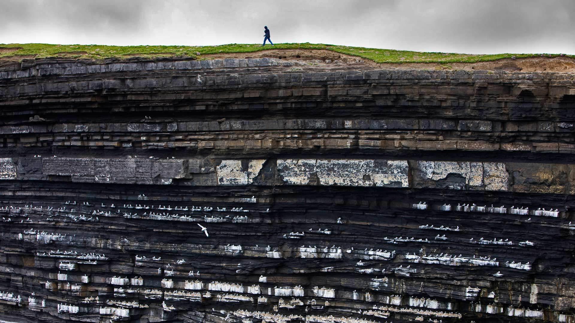 悬崖上的黑腿小鸟