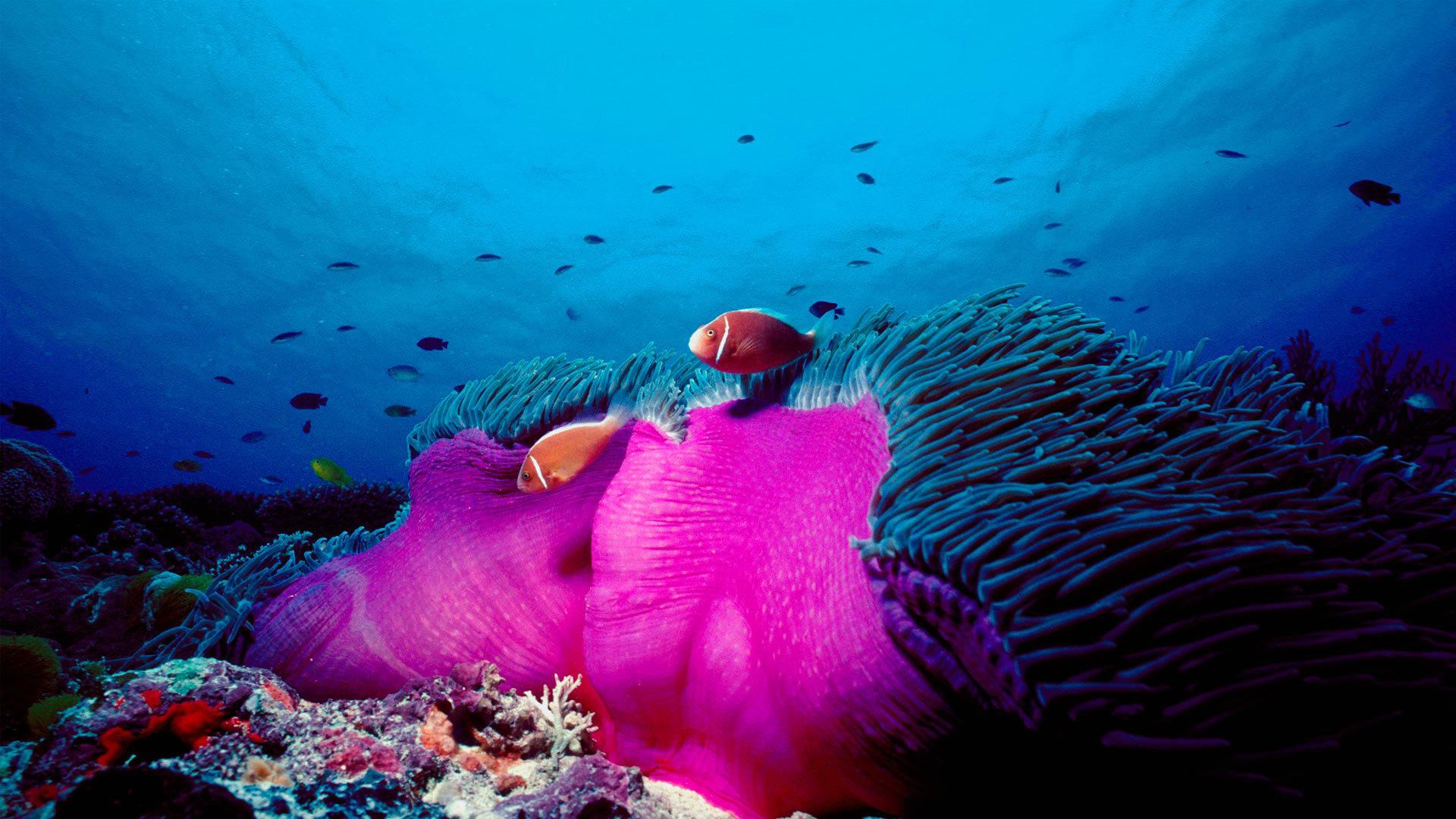 海洋生物的天堂
