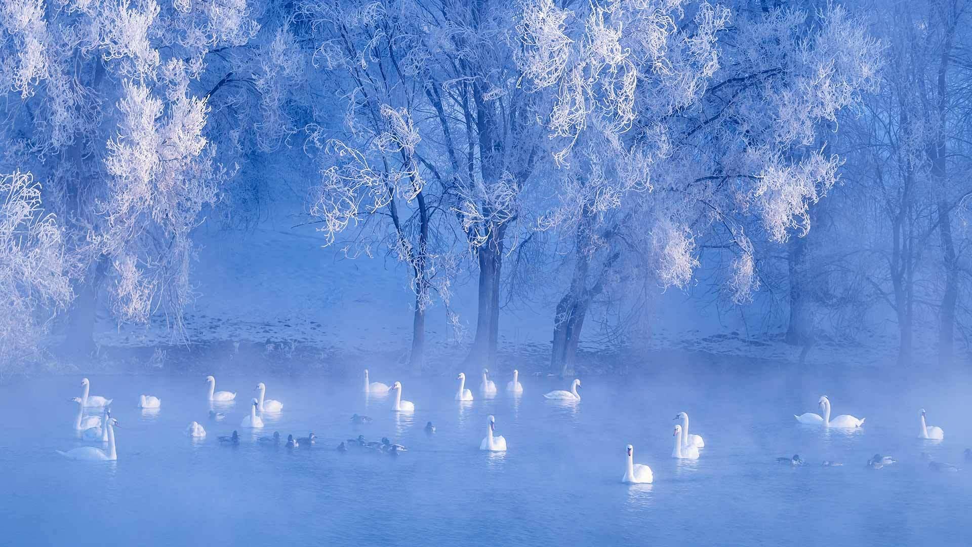 冬天的节日