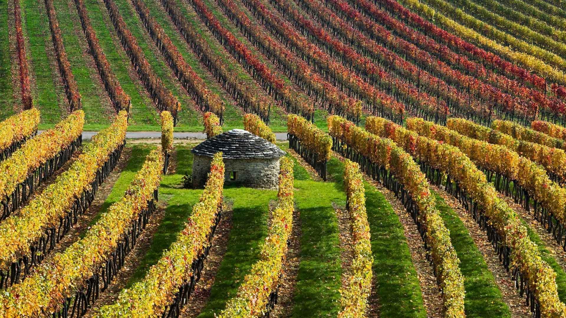 最复杂难懂的葡萄酒产区