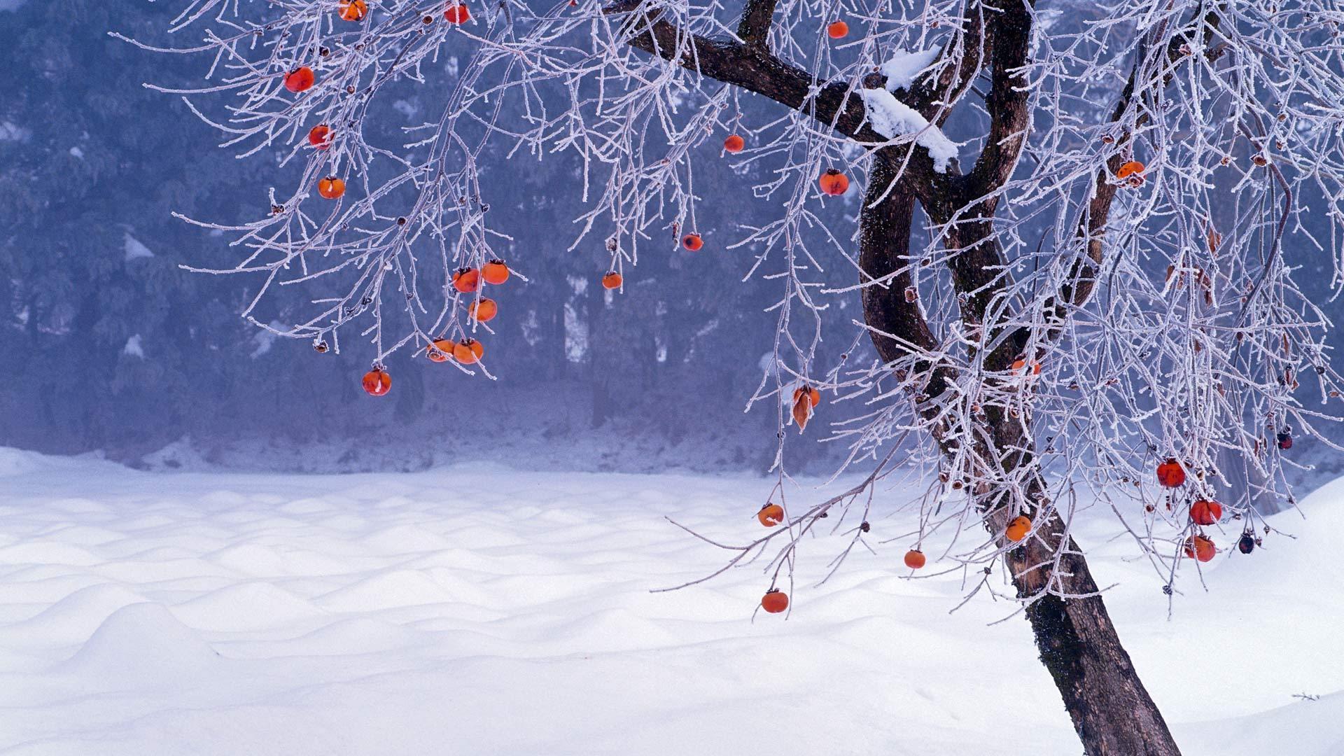 冬日里的福岛