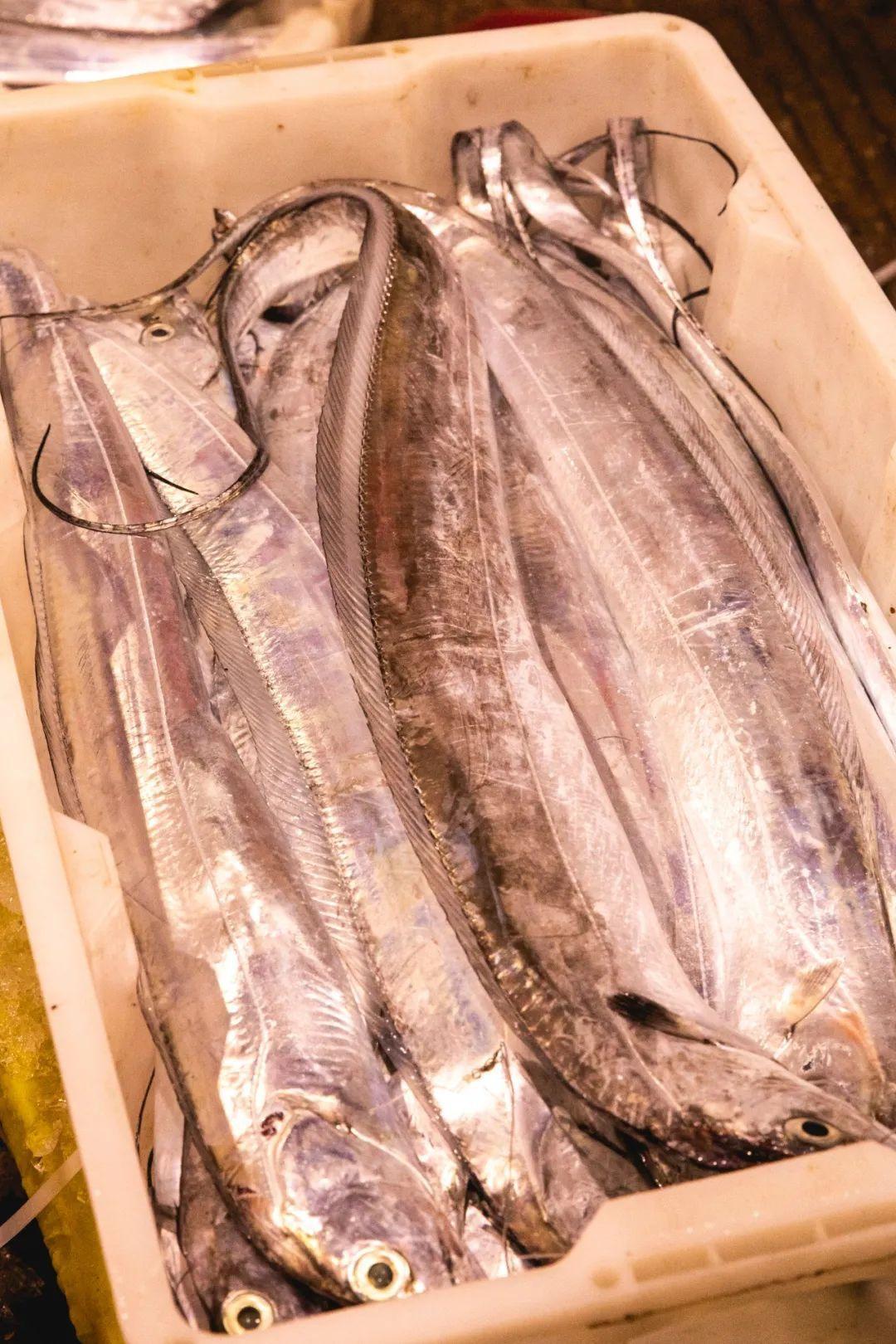 舟山海鲜市场里整装待发的带鱼。摄影/朱梦菲