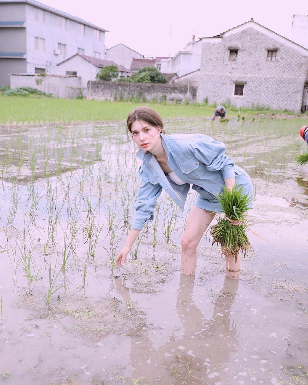 要不要考虑娶个外国老婆,帮你插水稻