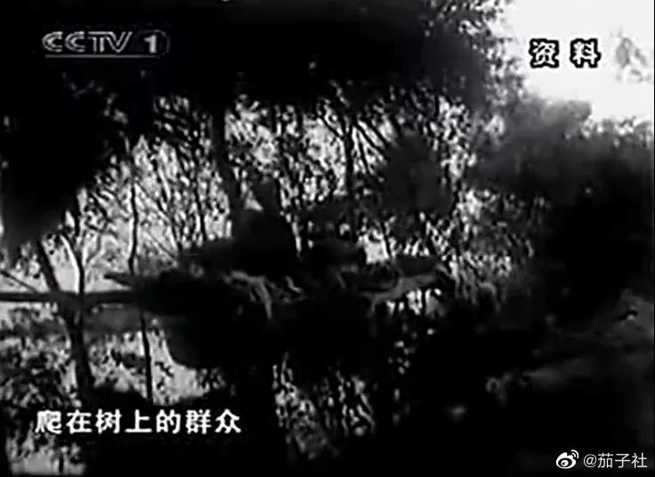 """020年最应该追忆的国产纪录片《追忆75.8水灾》"""""""
