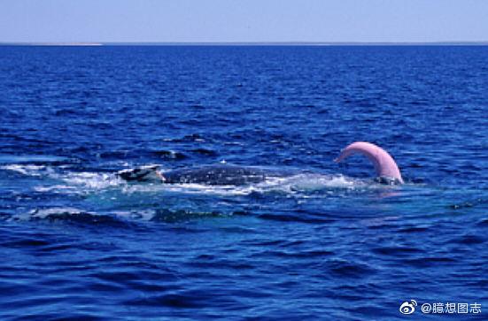 蓝鲸身长30米体重200吨,蓝鲸丁丁竟长达3米 liuliushe.net六六社 第7张