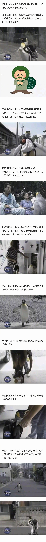 居住在日本、会背上小包包自己去鱼店买鱼的宠物帝企鹅Rara酱,最近又在外网火了。 涨姿势 第1张
