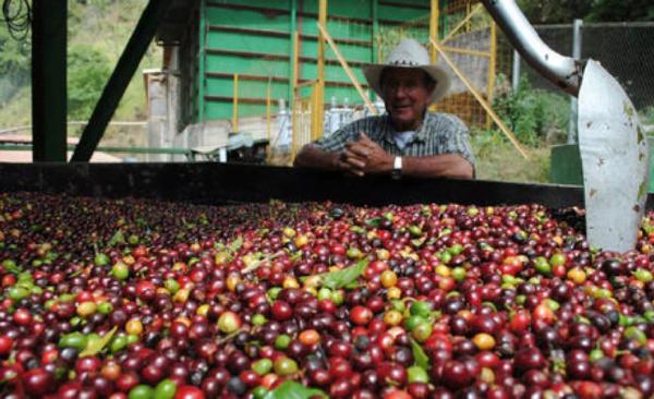 世界十大咖啡产国排行榜:世界40%的咖啡来自巴西