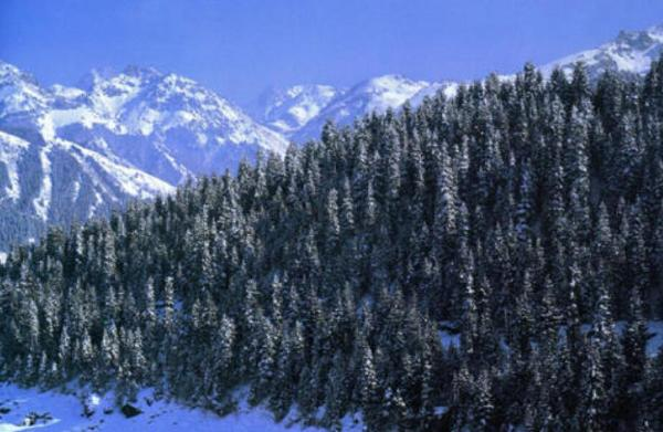 中国十大最美森林排行榜 中国最美的原始森林排名