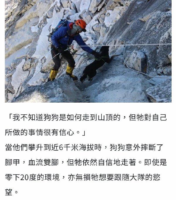 日刊:人不如狗!第一只登上喜马拉雅山的狗竟然是它! liuliushe.net六六社 第4张