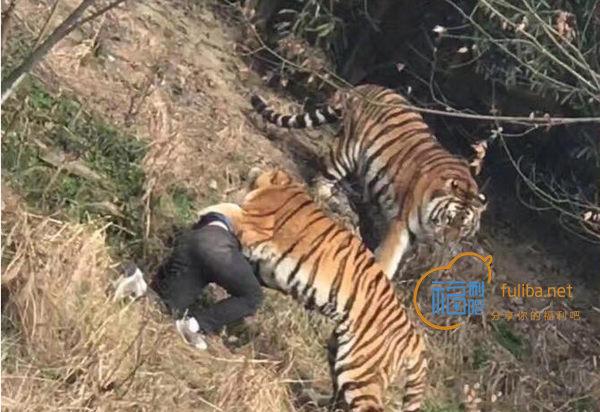大过年的有人被老虎咬死了,宁波雅戈尔动物园