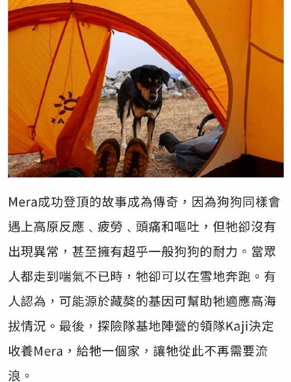 日刊:人不如狗!第一只登上喜马拉雅山的狗竟然是它! liuliushe.net六六社 第7张