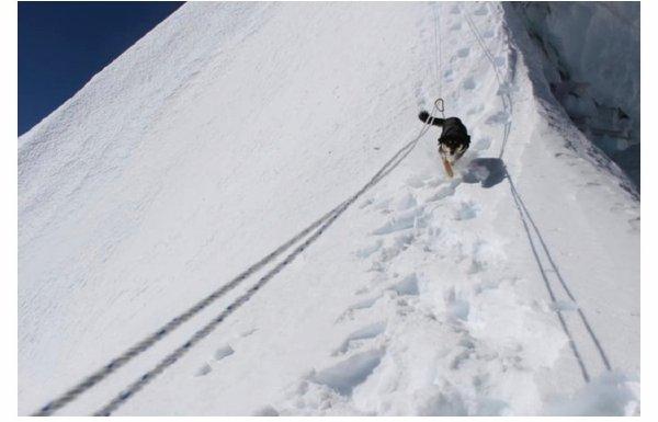 日刊:人不如狗!第一只登上喜马拉雅山的狗竟然是它! liuliushe.net六六社 第5张