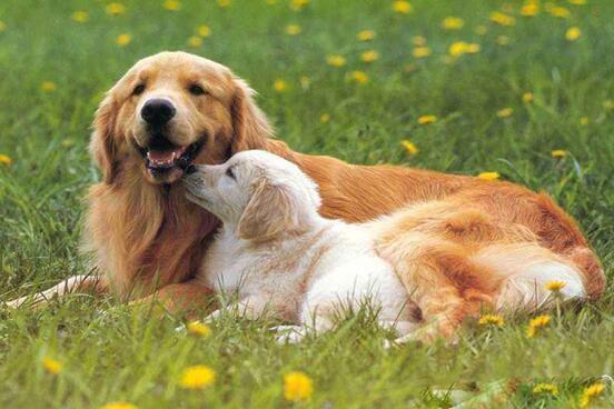 世界十大中型犬排行榜 最受欢迎的中型犬排名