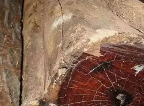 世界十大最坚硬的木材排行榜:白坚木被称为斧头终结者