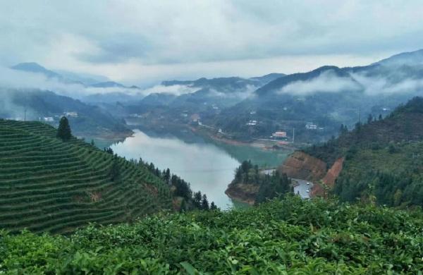 中国最著名的九大茶山排行榜:武夷山大红袍是世界非物质文化遗产