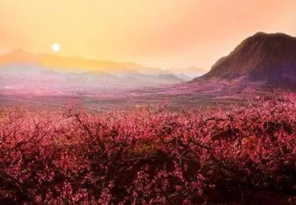 中国十大花海排行榜:三月的林芝花海桃花满天