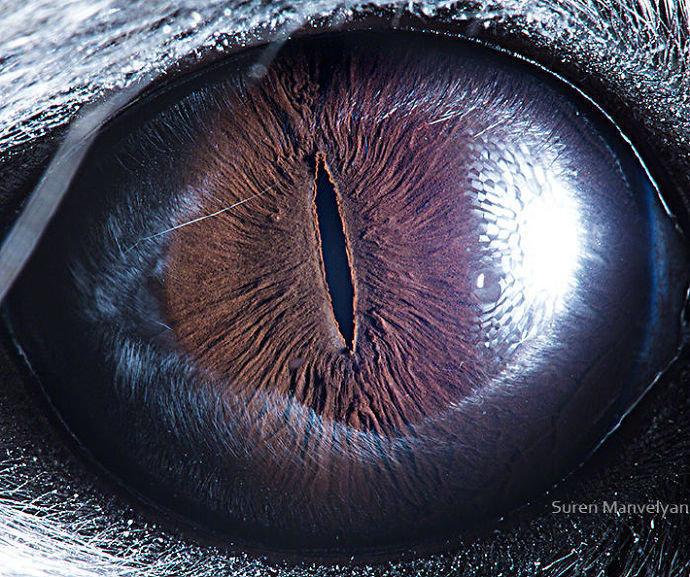 摄影师 Suren Manvelyan 拍摄的动物瞳孔照,每一个瞳孔都像是一个宇宙,太奇妙了!
