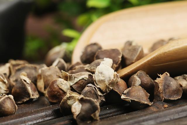 辣木的种植技术:辣木籽是怎么种出来的? 辣木种植