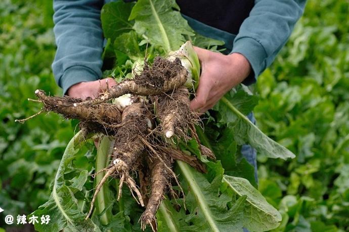 想种出美味又营养的蔬菜,最应该注意的是植物的「根」