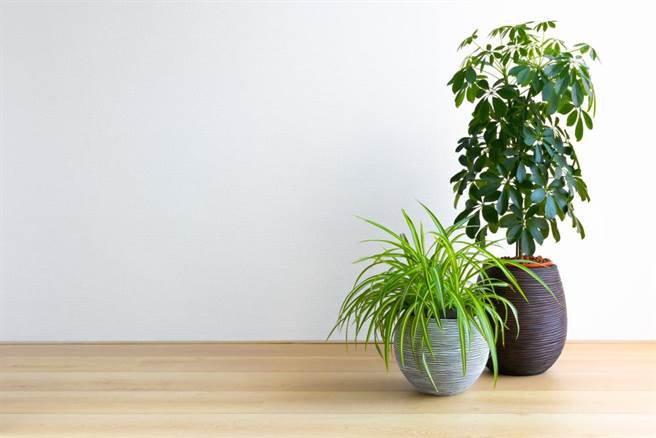 一盆吸掉家中 80%有害气体,5 大植物代替空气清净机