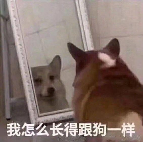 我怎么长得跟狗一样