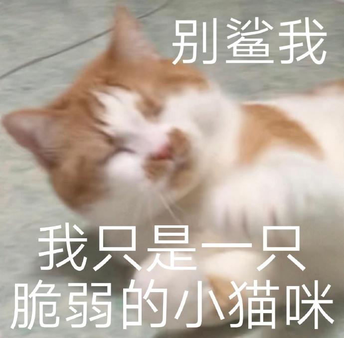 猫咪表情包 小猫咪能有什么坏心眼呢