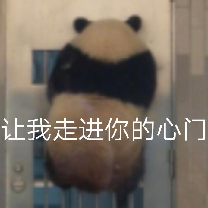 大熊猫表情包