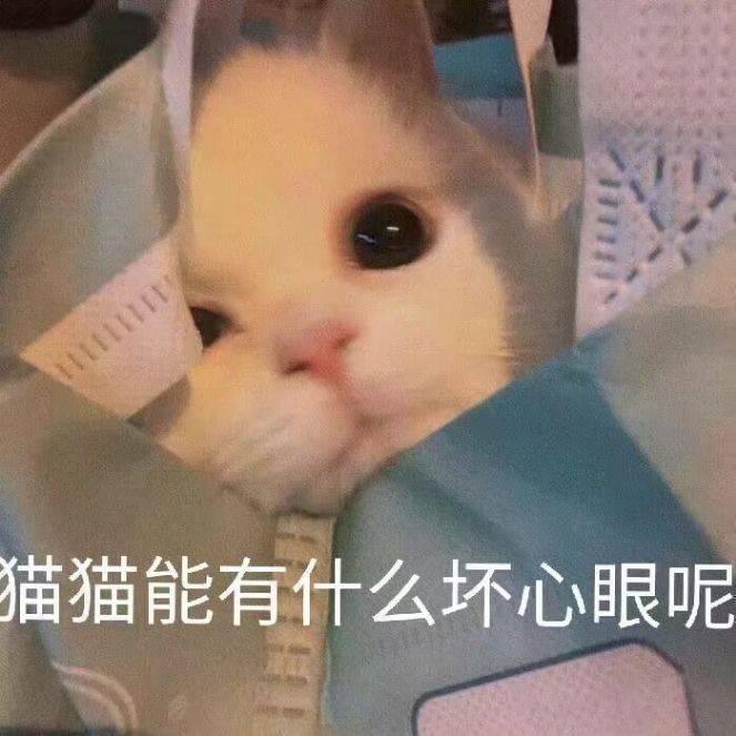 猫猫能有什么坏心眼呢