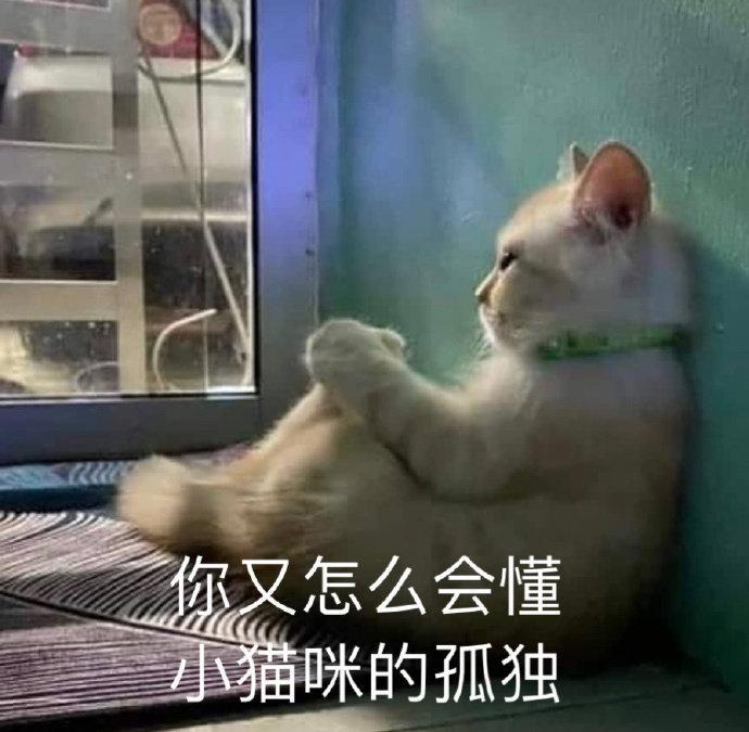 你又怎么会懂 小猫咪的孤独