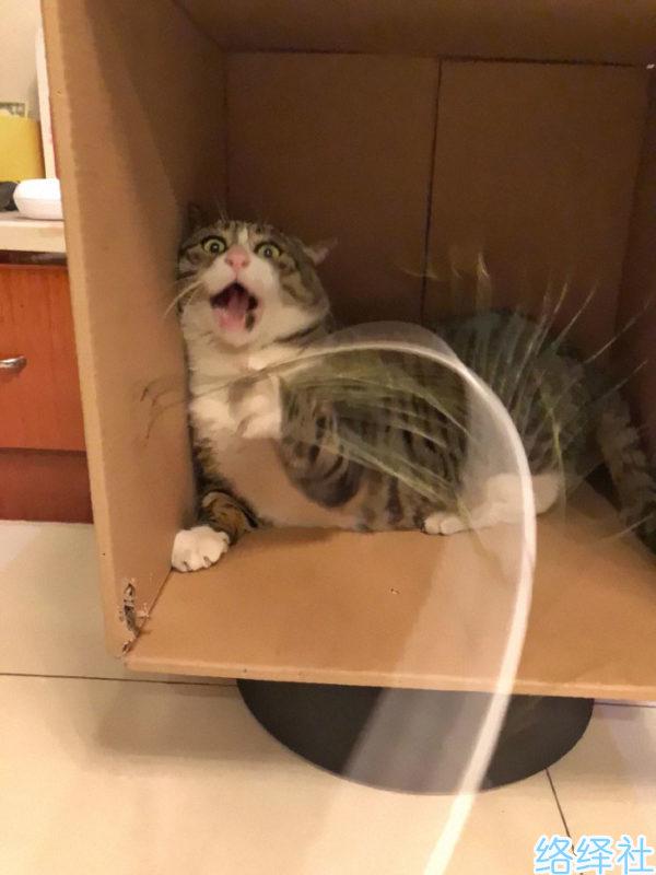"""一脸不正经的网红猫""""阿肥""""被网友制作成猫咪表情包"""
